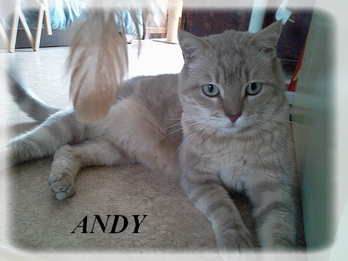 ANDY