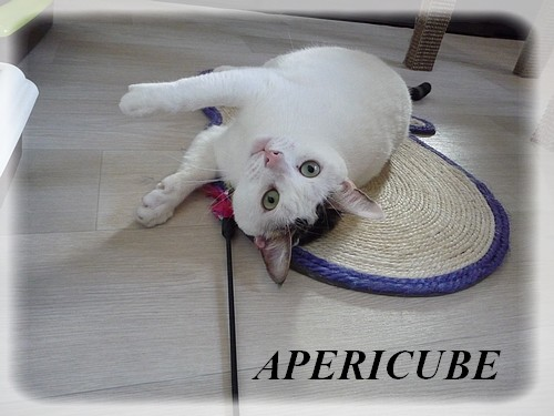 APERICUBE