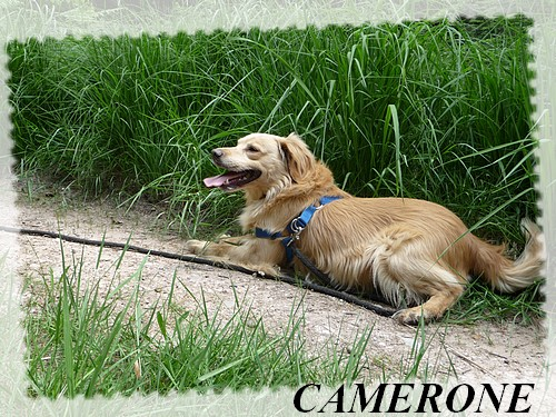CAMERONE