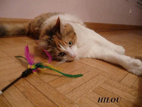 HILOU
